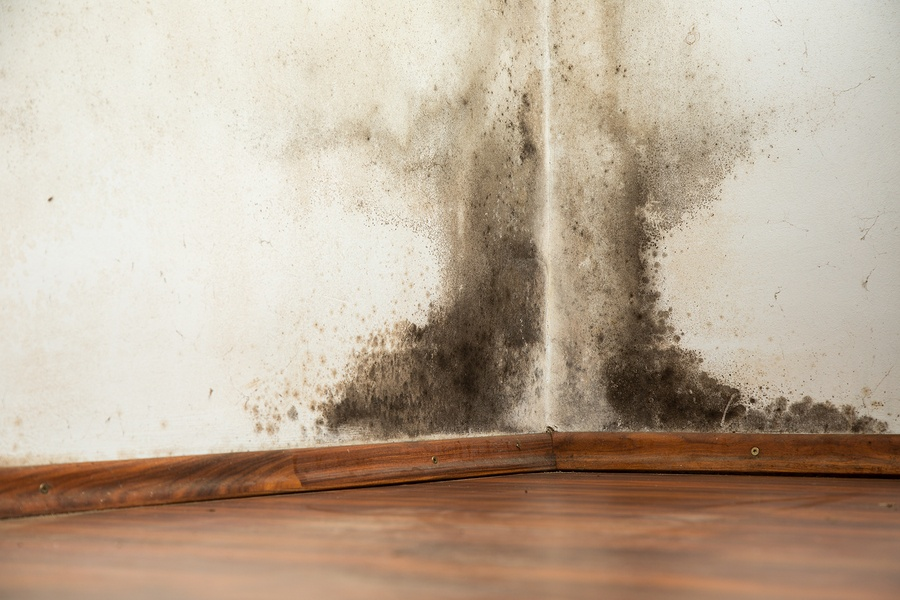 What Are the Causes of Mold Development at Home?